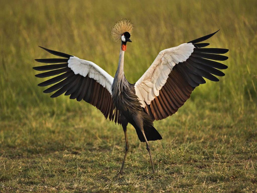 African Crowned Crane Wallpaper 1024x768