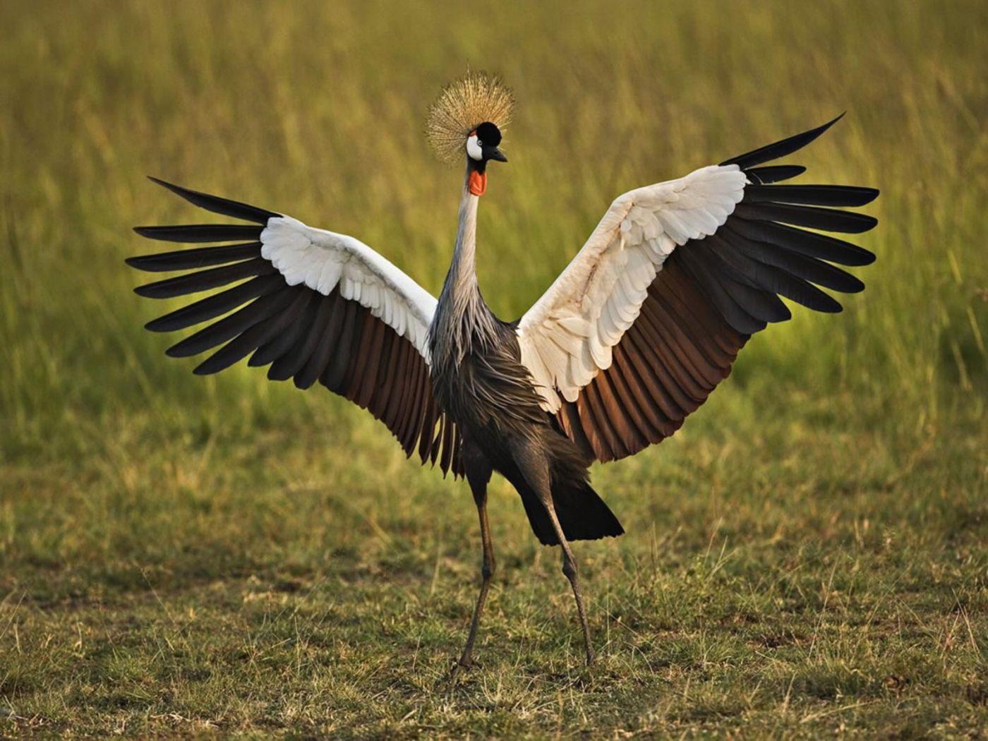 African Crowned Crane Wallpaper 1400x1050