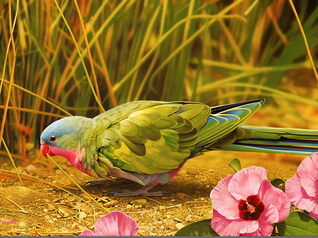 African Lovebird On The Ground Wallpaper 1024x768