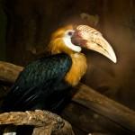 Bird With Large Beak Wallpaper