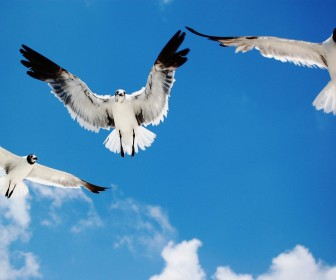 Birds Flying In The Sky Wallpaper