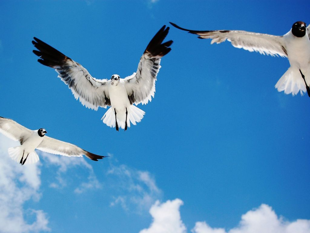 Birds Flying In The Sky Wallpaper 1024x768