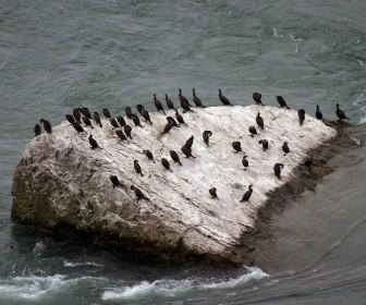 Birds On Rock Wallpaper