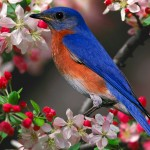 Blue Bird Pink Flowers Wallpaper
