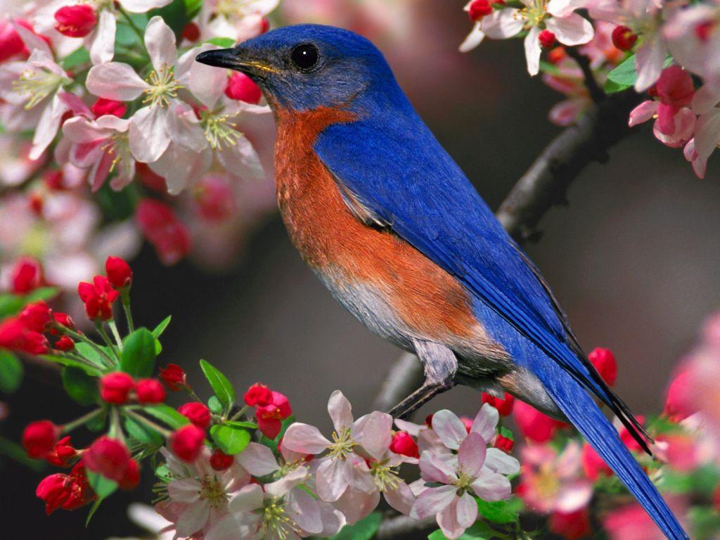 Blue Bird Pink Flowers Wallpaper 1024x768