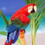 Colorful Parrot Portrait On Branch Wallpaper
