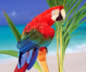 Colorful Parrot Portrait On Branch Wallpaper
