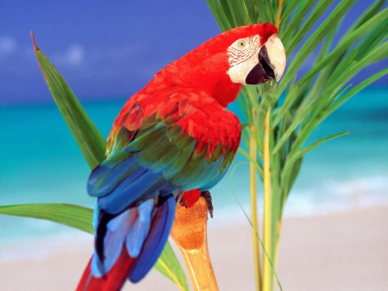 Colorful Parrot Portrait On Branch Wallpaper 800x600