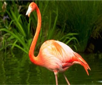 Flamingo Solo Side View Portrait Wallpaper