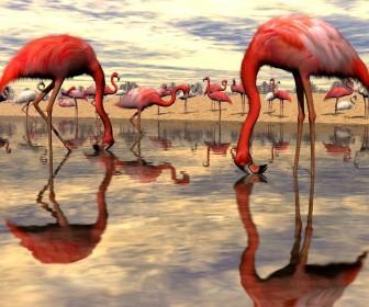 Flock Of Flamingo Digital Wallpaper