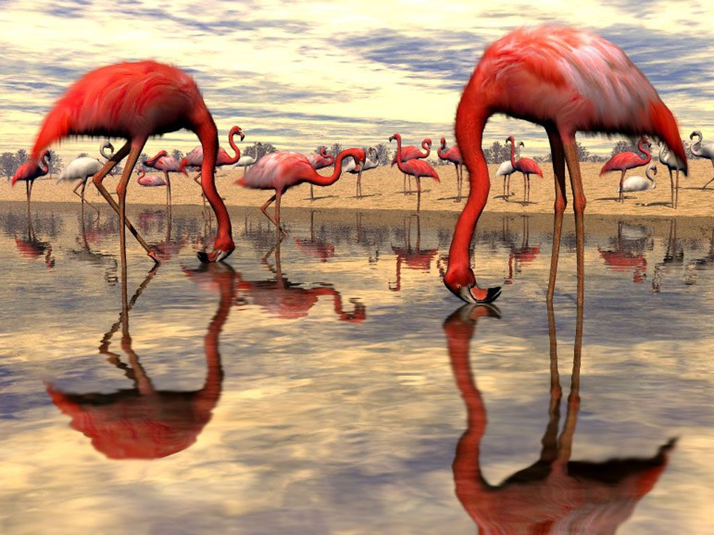Flock Of Flamingo Digital Wallpaper 1024x768