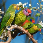 Four Colorful Birds On A Branch Wallpaper