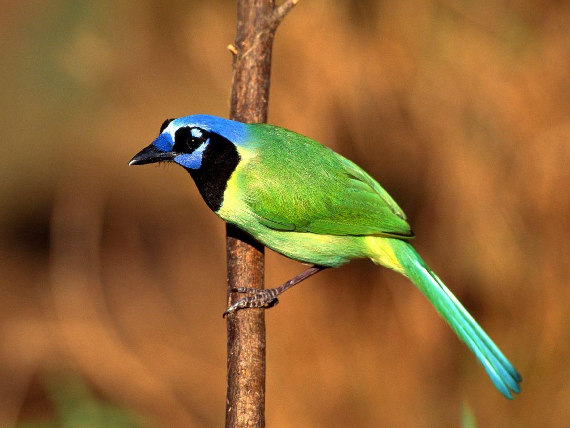 Green Bird Close Up Wallpaper 1152x864