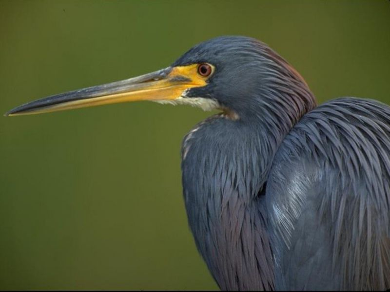 Long Beak Side View Wallpaper 800x600