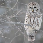 Owl On Tree Branch Portrait Wallpaper