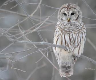 Owl On Tree Branch Portrait Wallpaper