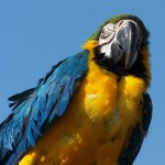 Parrots Close Up From Below Wallpaper