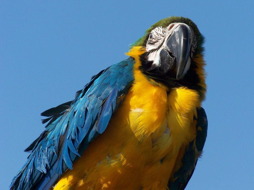Parrots Close Up From Below Wallpaper 1024x768