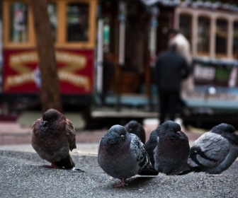 Pigeons Cable Car Background Wallpaper