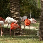Pink And Orange Flamingos Wallpaper