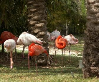 Pink And Orange Flamingos Wallpaper