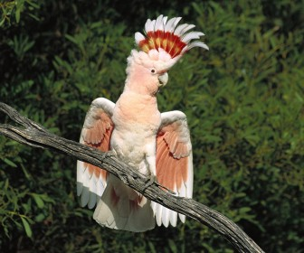 Pink Exotic Bird On Tree Branch Wallpaper