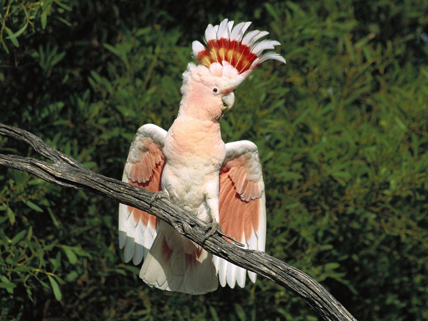 Pink Exotic Bird On Tree Branch Wallpaper 1400x1050