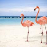 Pink Flamingos Beach Wallpaper