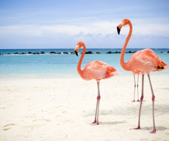 Pink Flamingos Beach Wallpaper