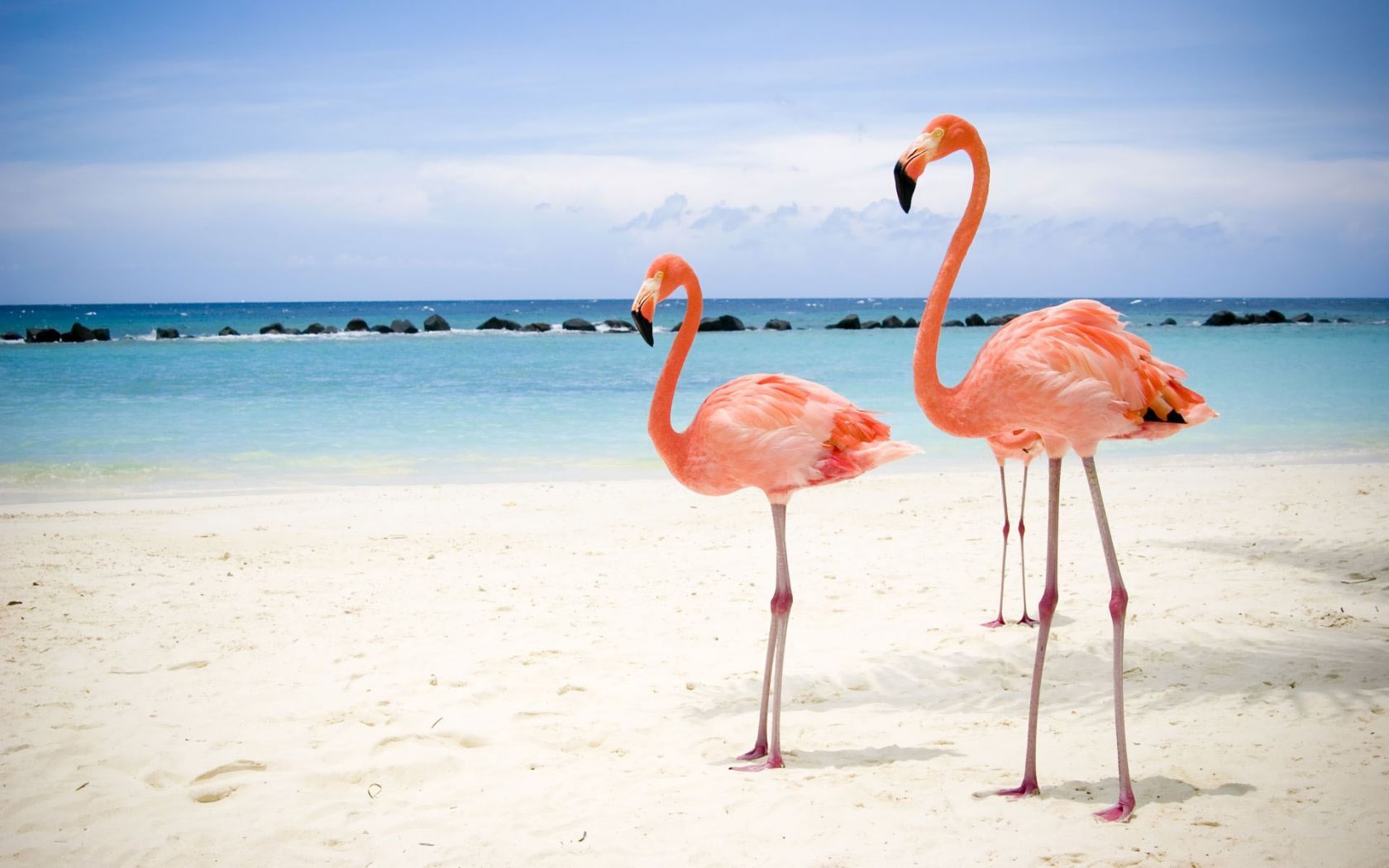 Pink Flamingos Beach Wallpaper 1680x1050