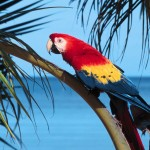 Scarlet Macaw On Branch Wallpaper
