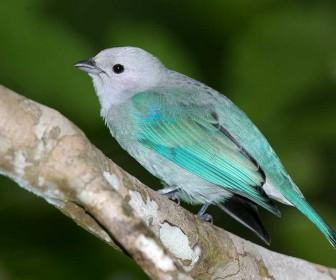 Small Bird Blue Feathers Wallpaper