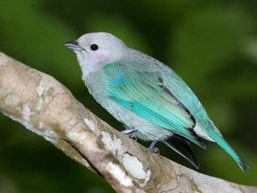 Small Bird Blue Feathers Wallpaper 1024x768