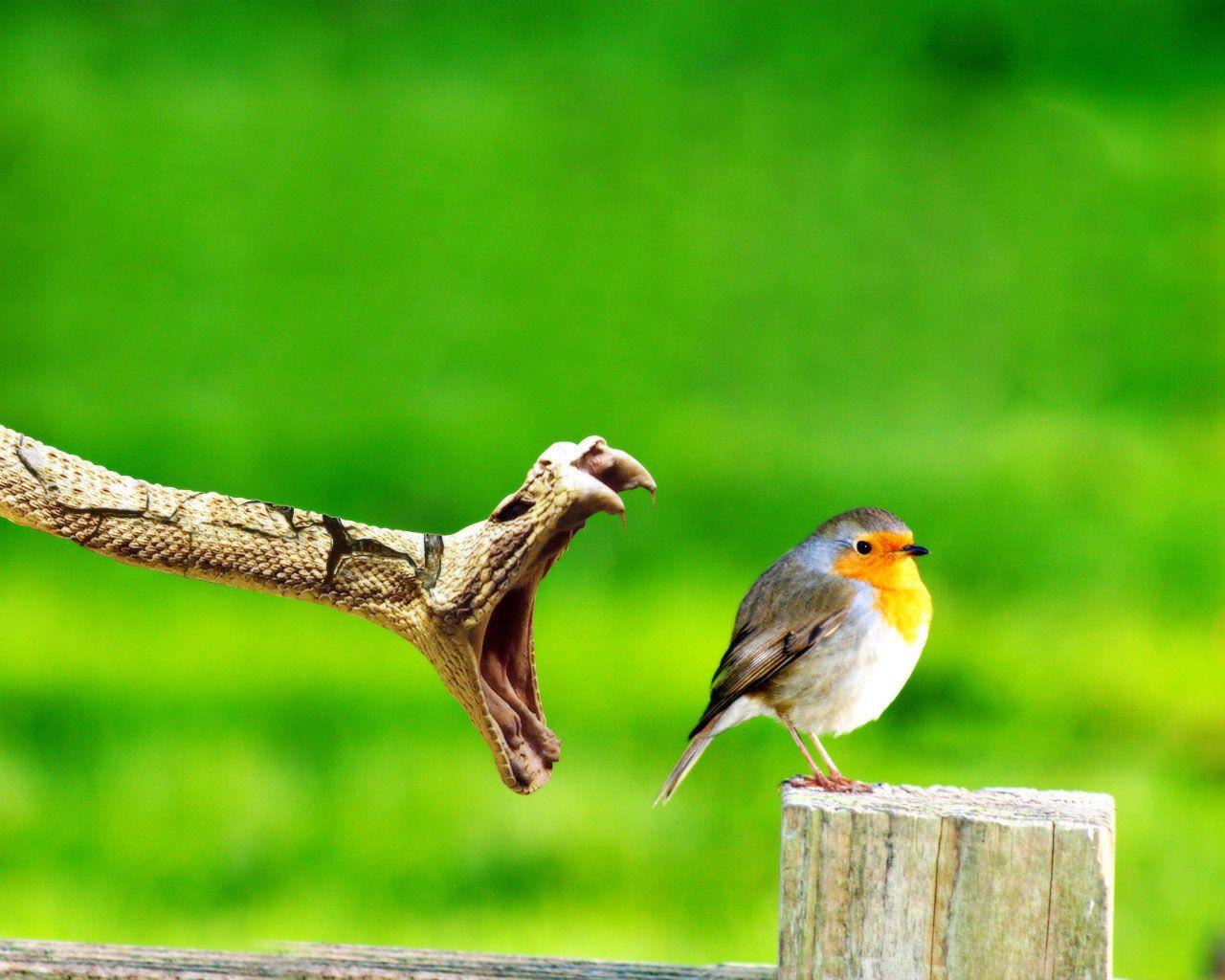 Small Bird In Danger Wallpaper 1280x1024