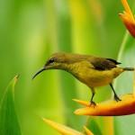 Small Bird On Bird Of Paradise Flower Wallpaper