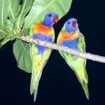 Two Parrots On Tree Wallpaper