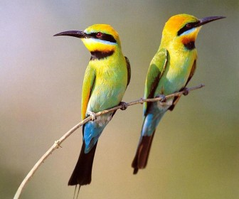 Two Small Birds On Branch Wallpaper