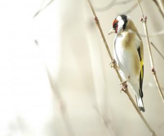 White Bird Hanging On Branch Wallpaper