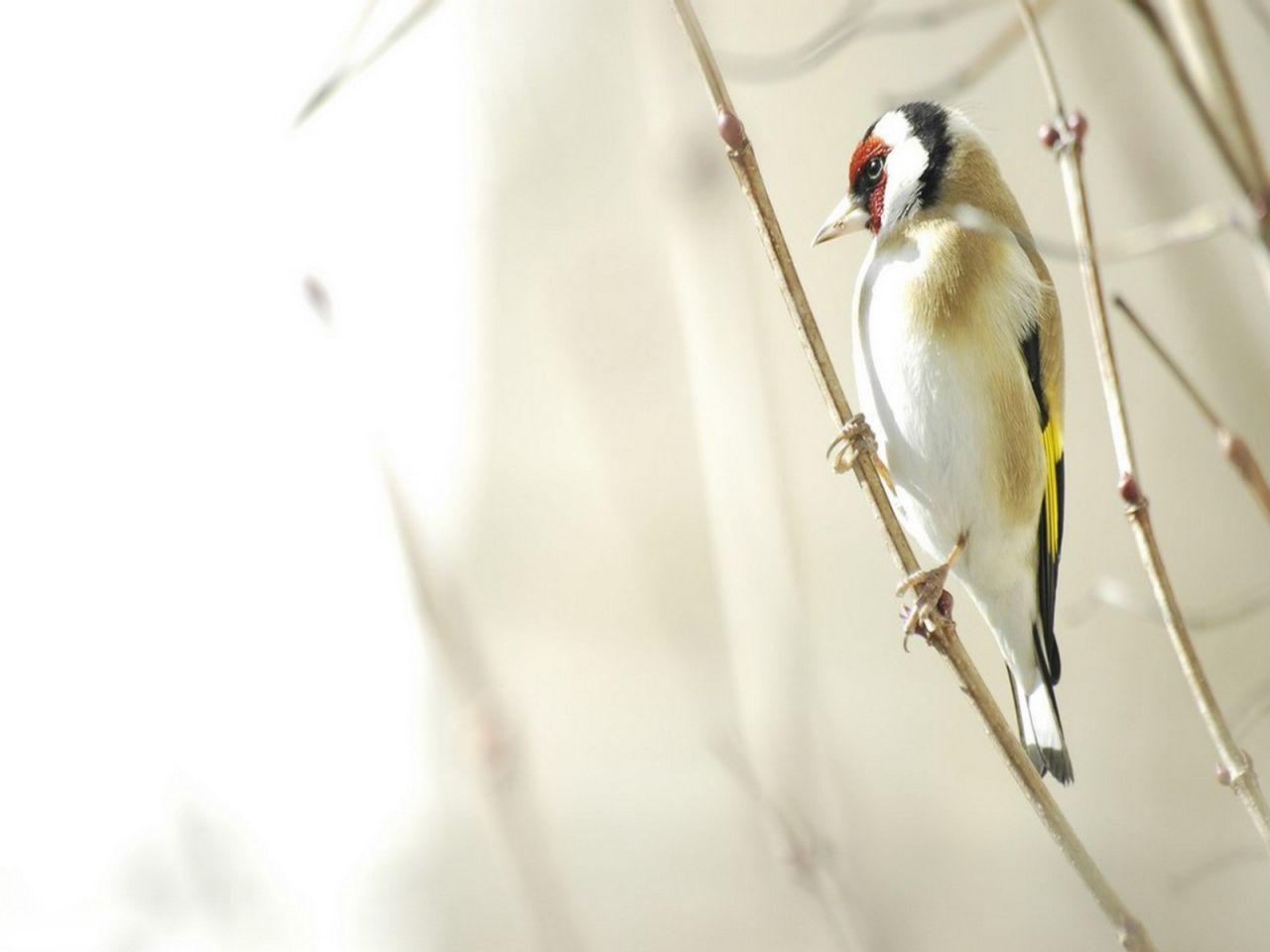 White Bird Hanging On Branch Wallpaper 1280x960