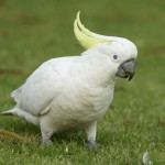 White Parrot On Grass Wallpaper